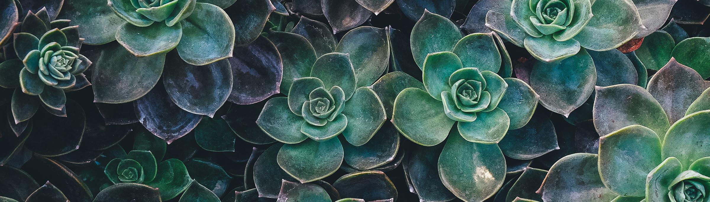 succulents-header